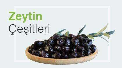 banner-zeytin
